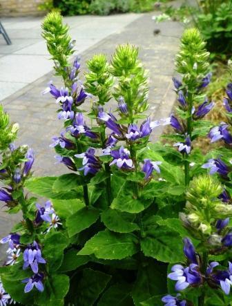 naam van deze plant