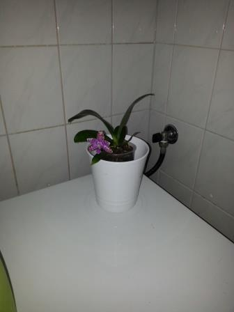 Wat van mijn bloeiende orchideeën