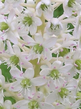 Opvallende plant, maar hoe heet ie?