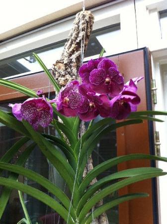 bloemenzee en tweelingbloemtakje