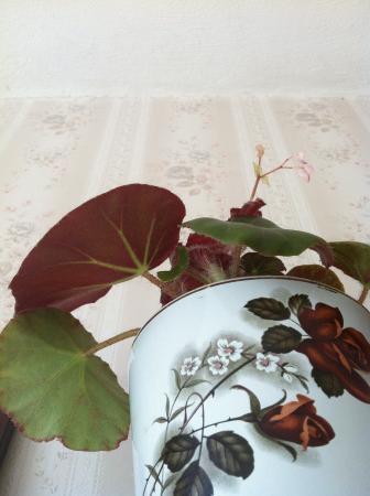 Hulp bij determinatie plant