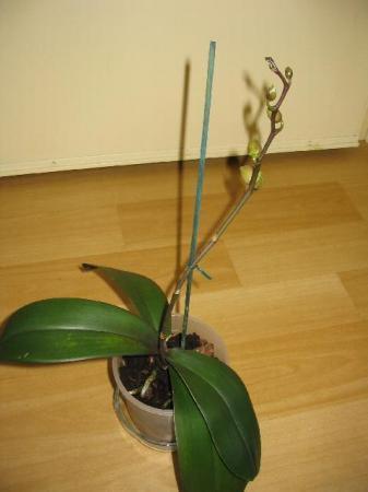 Mijn Orchideeen.