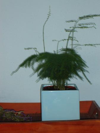 Welke plant is dit?