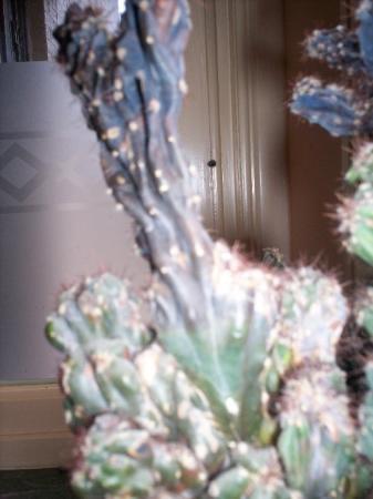 Cactus welke soort en waarom verkleuren er delen