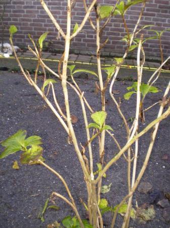 nieuw huis/tuin, welke planten/struiken staan er??