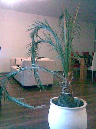 Staat palm na verhuizing