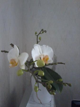 nieuwe bloeiers.