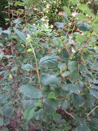 Een aantal planten/struiken ter identificatie