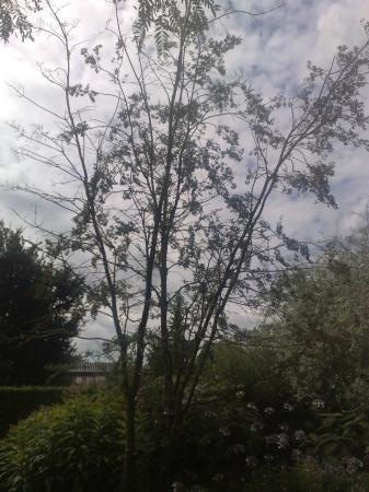 mooie planten uit de tuinen van appeltern