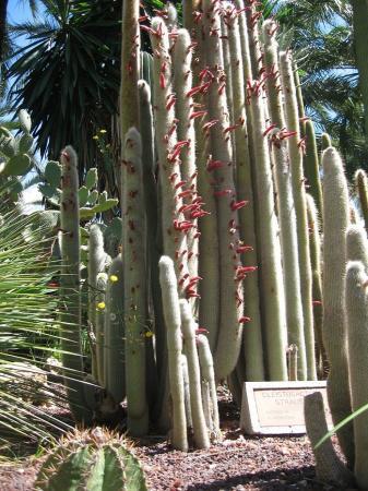 Voor cactusliefhebbers