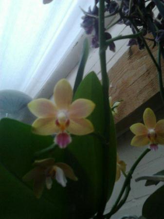 mijn orchideen