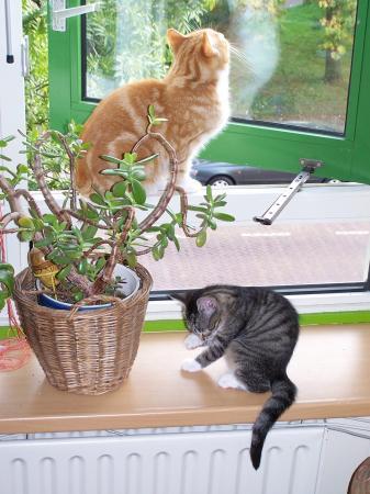 katten slopen de plantenpoten .