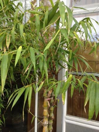 Wat is dit precies voor bamboe?