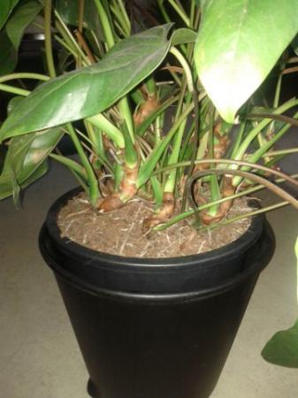 zieke plant gevonden! Graag reactie op foto's!