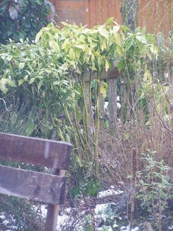 hoe vlot groeit broodboom?