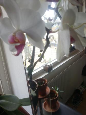 Phalaenopsis: Gaat het goed of slecht?
