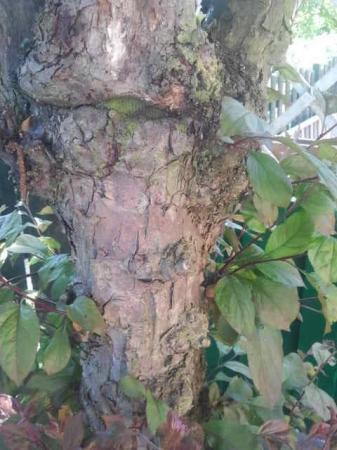 Welke boom/heester zou dit zijn?