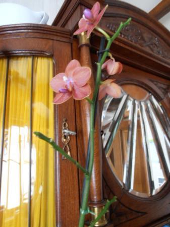 phaleanopsis nieuwe zijtakjes maar niets van bloem
