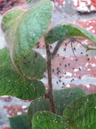 Hoe kan ik meer spinnen lokken naar me tuin?