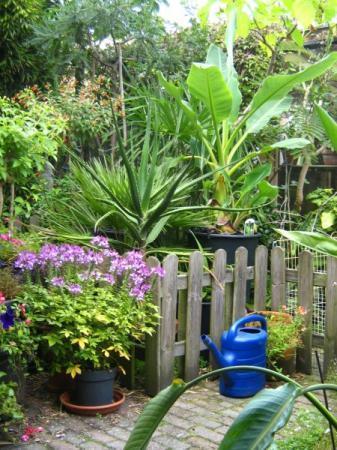 Onze tuin Augustus 2013