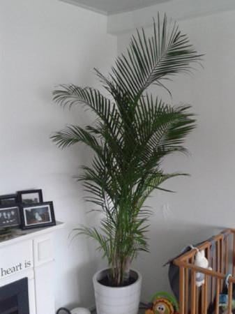 welke soort palm?