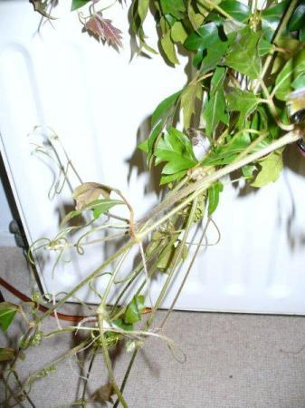 Plant groeit vreemd