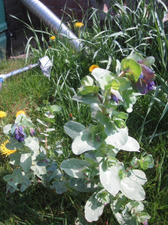 Bloem in eigen tuin en boom buren