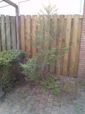 Wat voor boom of struik is dit?