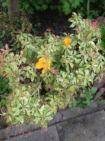 Mooie plant van de buren