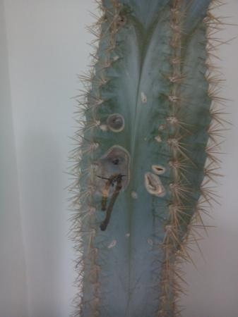 Nieuwe cactussen: verschillende vraagjes