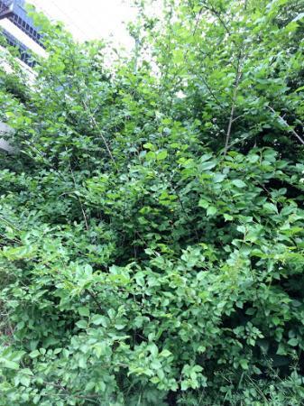 Kan iemand deze bomen herkennen #1