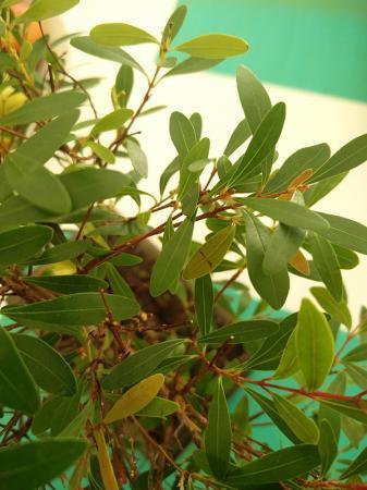 Bonsai en de verzorging