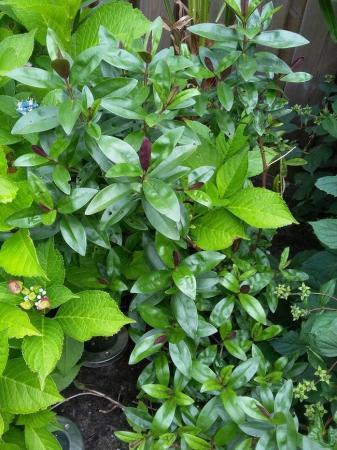 Naam plantjes