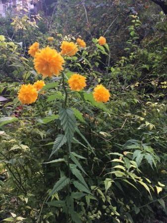 Wie herkent deze plant (nog niet opgelost)