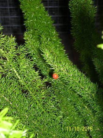Wie kan ons helpen met de naam van deze plant ?