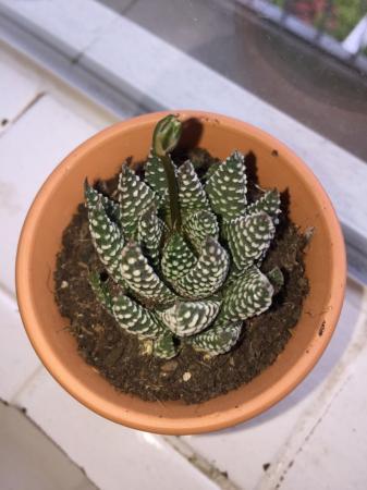 Hoe heet mijn plant en wat groeit er uit?