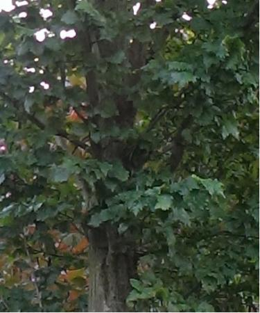 Welke boom en wanneer kan ik deze snoeien