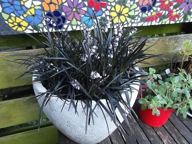 Wat is de naam van deze plant?