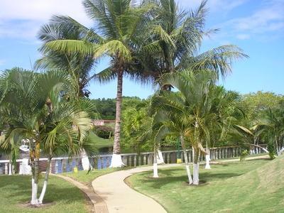 tip verhelpen stamrot bij trachycarpus fortunei