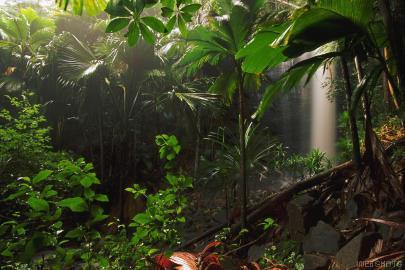 jungletuin