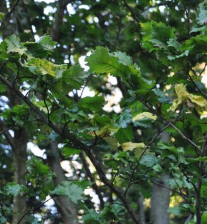 naam plant onbekend