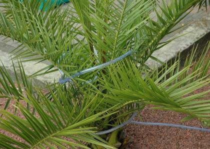 11 ) Wintervoorzieningen voor planten en bomen