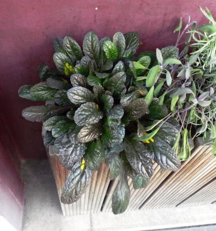 planten in bakken aan Chinees restaurant