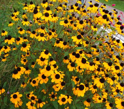bloemen planten floriade