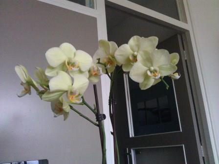 derde bloemstengel in de maak