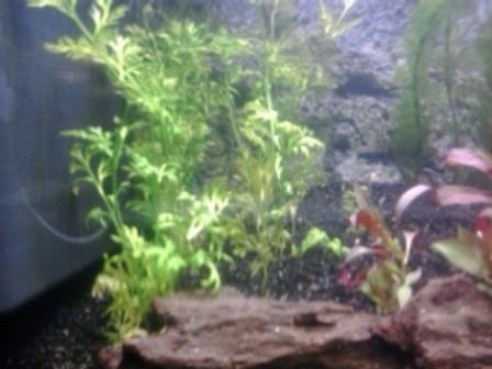 aquarium in opbouw