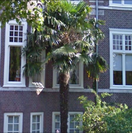 De Efteling beschermd zijn palmen en exoten goed