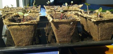 zaden/plantjes/stekjes water geven mbv schalen