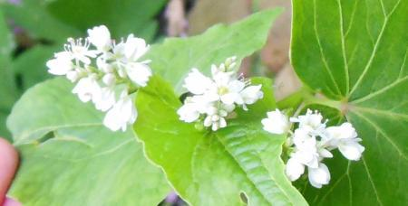 wit bloemetje