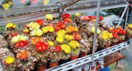 Het leuke aan cactussen
